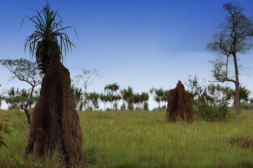 Salah satu sudut ekosistem masamus berada