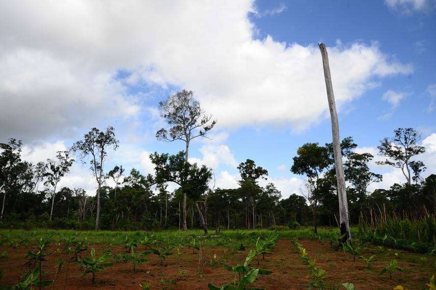 Salah satu sudut wilayah sekitar perbatasan yang dimanfaatkan warga untuk bercocok tanam