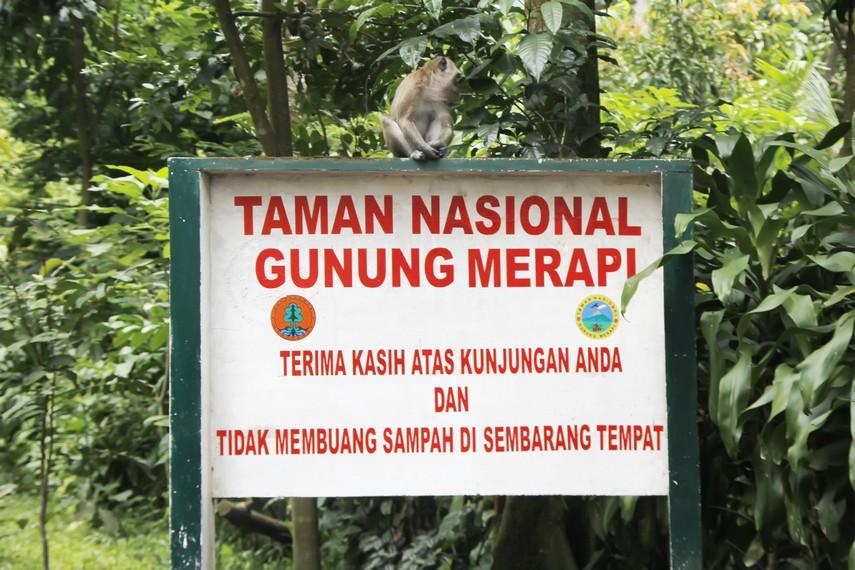 Seekor monyet di Taman Nasional Gunung Merapi, Kaliurang