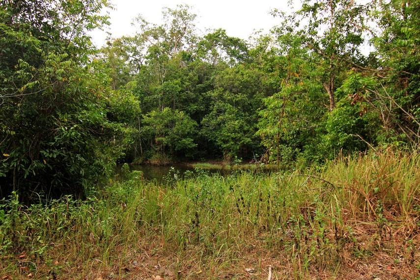 Selain tumbuhan, di tempat ini, pengunjung juga bisa menemukan berbagai satwa liar yang berkeliaran bebas