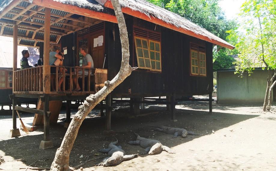 Selain komodo, Pulau Rinca juga dihuni oleh beberapa hewan lain seperti rusa, babi hutan, kerbau, dan lain-lain
