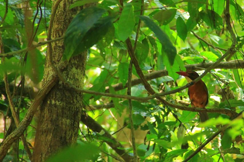 Selain tarsius, di taman wisata alam ini juga menjadi salah satu habitat burung cantik yaitu burung rangkong