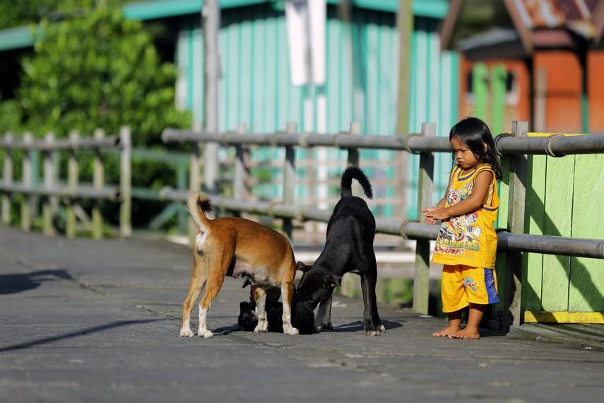 Seorang anak sedang bermain bersama anjing peliharaannya