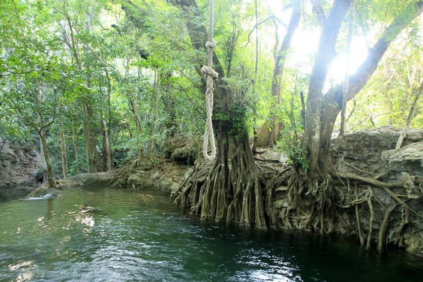 Seutas tali yang dililitkan pada batang pohon bisa digunakan untuk bergelantungan