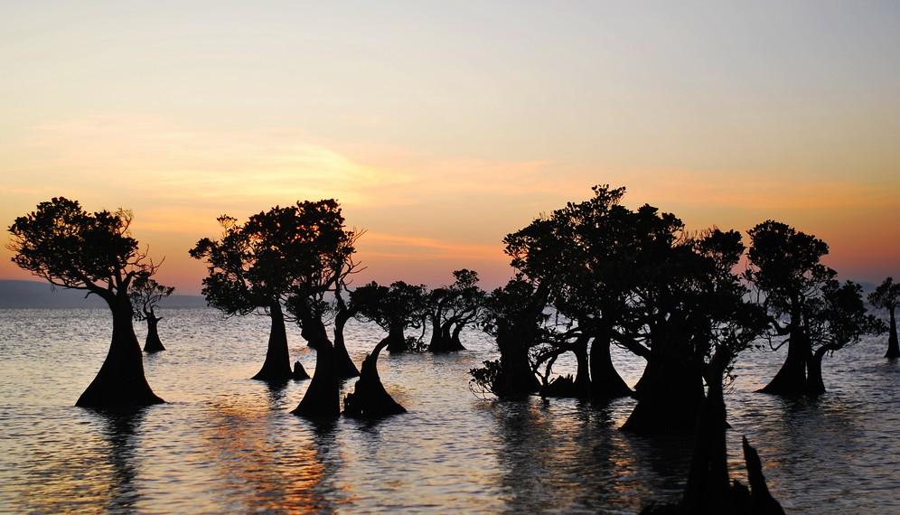Siluet pohon mangrove yang terlihat sungguh artistik dan fotogenik
