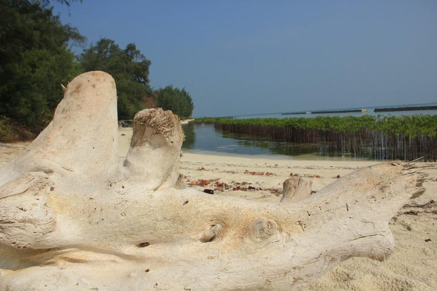 Sisa-sisa batang pohon menjadi pemandangan tersendiri di Pulau Karya