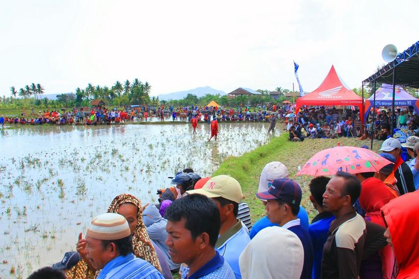 Suasana masyarakat di Sumbawa menyaksikan tradisi <i>barapan kebo</i>