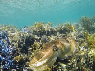 Melihat Pesona Lain Pulau Flores di Taman Laut 17 Pulau Riung