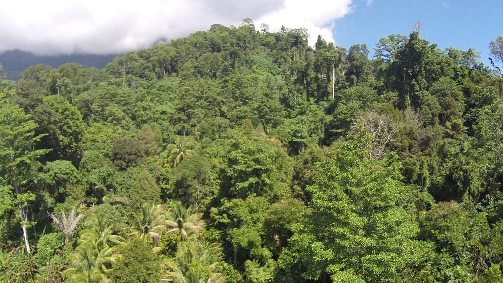 Taman Nasional Manusela dari ketinggian