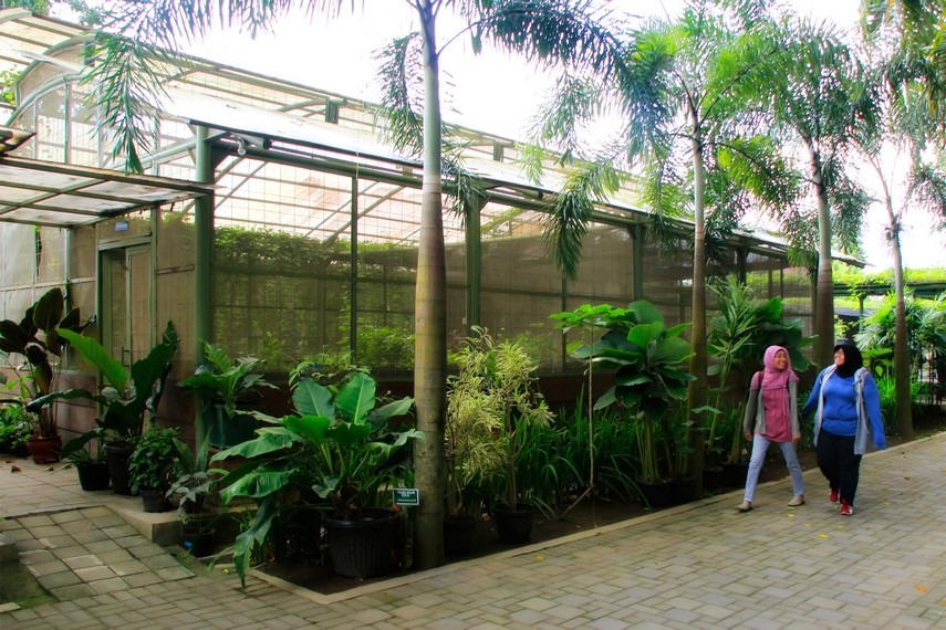 Tempat budidaya tanaman obat yang ada di Kebun Binatang Gembira Loka