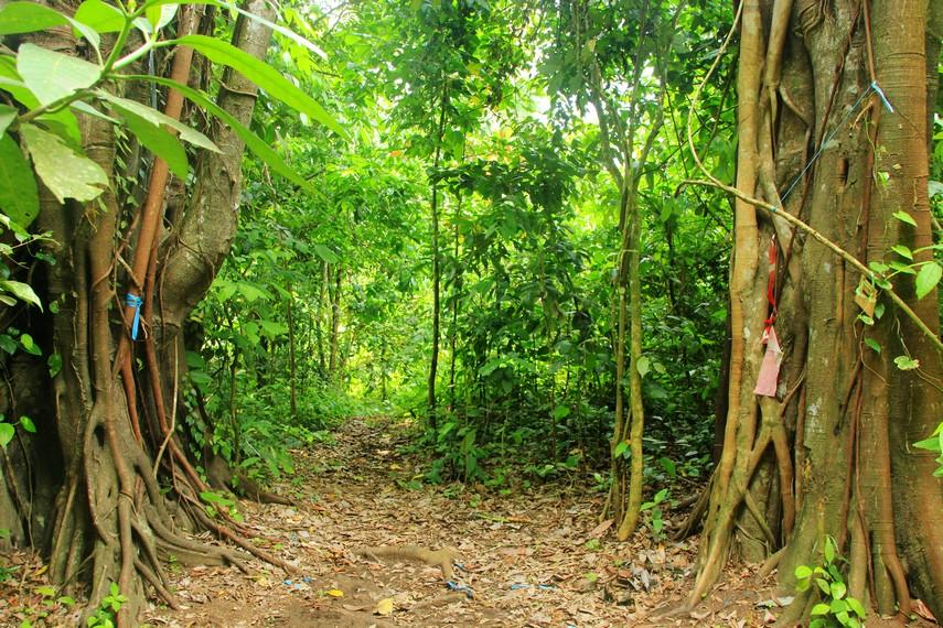 Terdapat pohon beringin yang menyerupai gerbang saat memasuki area dalam hutan