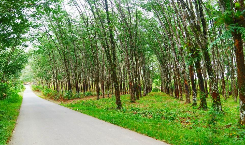 Terletak di dekat Pasar Binuang tepatnya di Desa Batu Hapu, Kecamatan Hatungun, Tapin