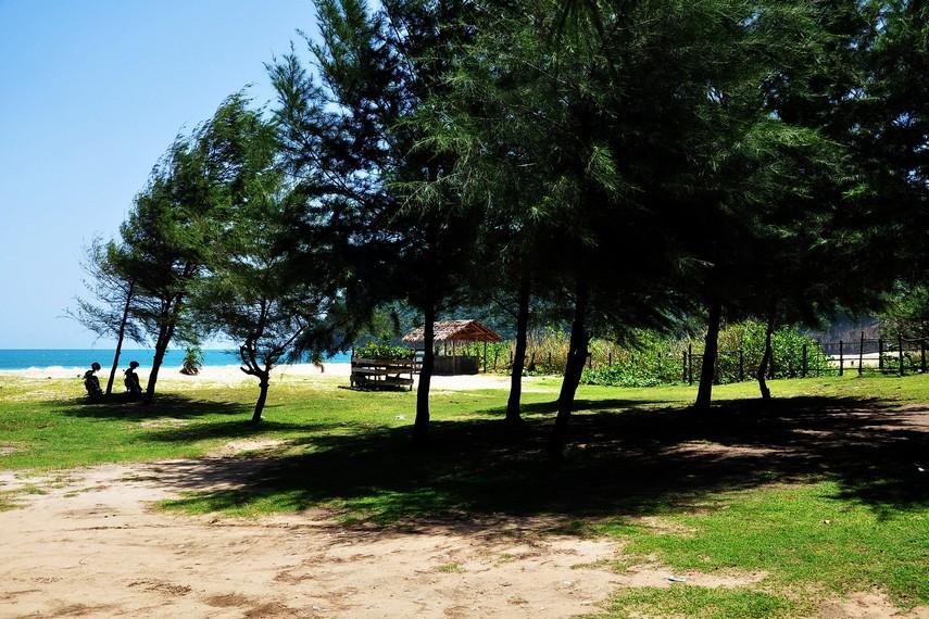 Tidak hanya fasilitas penunjang, pohon pinus yang dulu rimbun pun mulai tumbuh di sekitar pantai