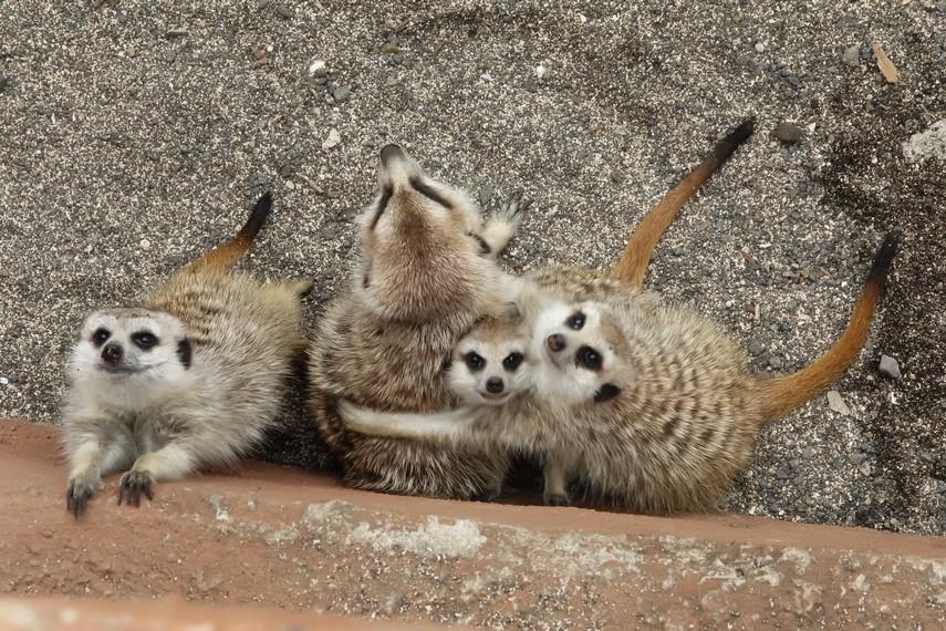 Tingkah polah hewan yang lucu bisa membuat pengunjung tertawa saat melihatnya
