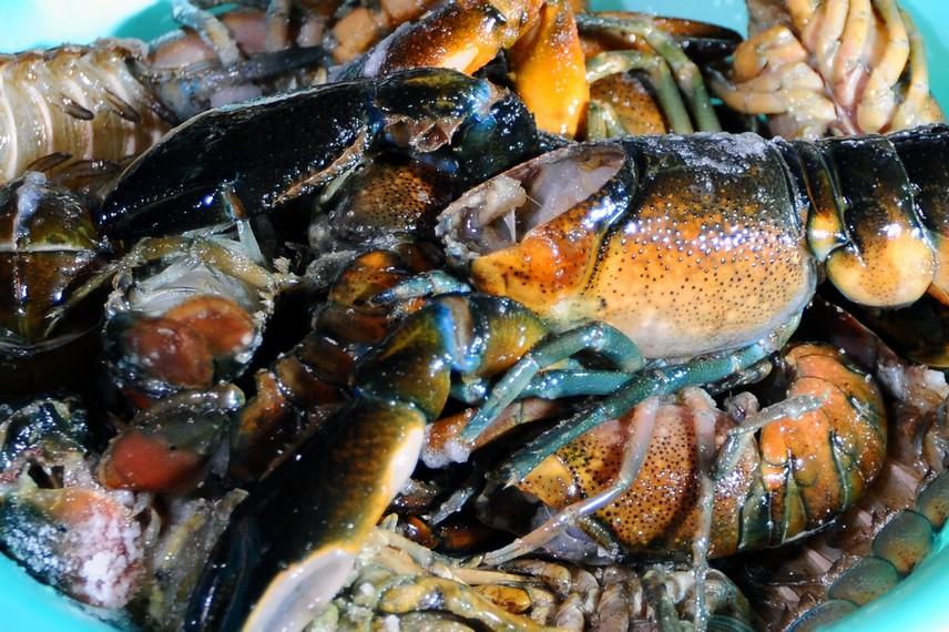 Udang selingkuh adalah udang air tawar yang memiliki capit seperti kepiting