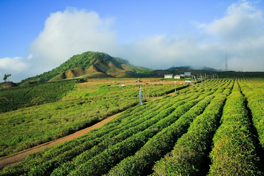 Untuk menikmati panorama serba hijau di Malino Highlands, para pengunjung harus membayar tiket masuk sebesar Rp 50.000,- per orangnya