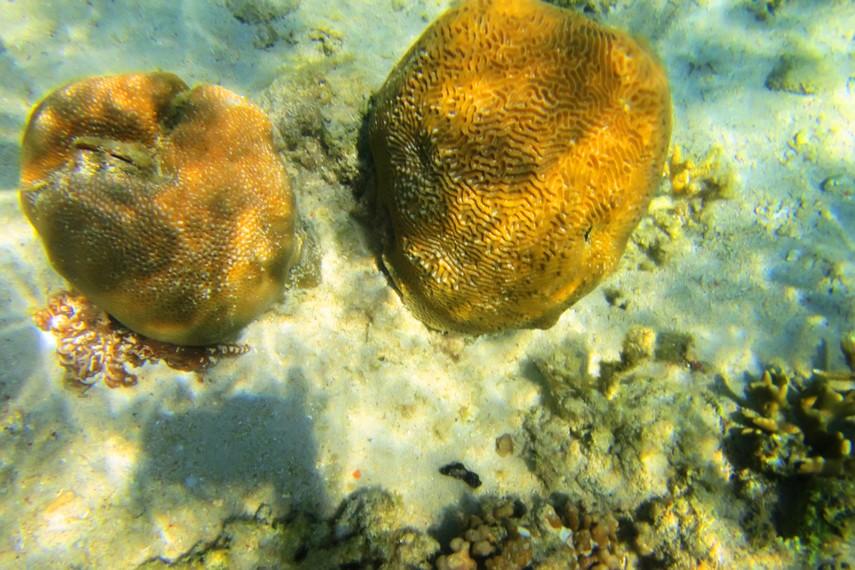 Untuk menyelam di Pulau Samalona, Anda bisa menggunakan jasa penyewaan alat-alat diving dan <i></noscript><img class=