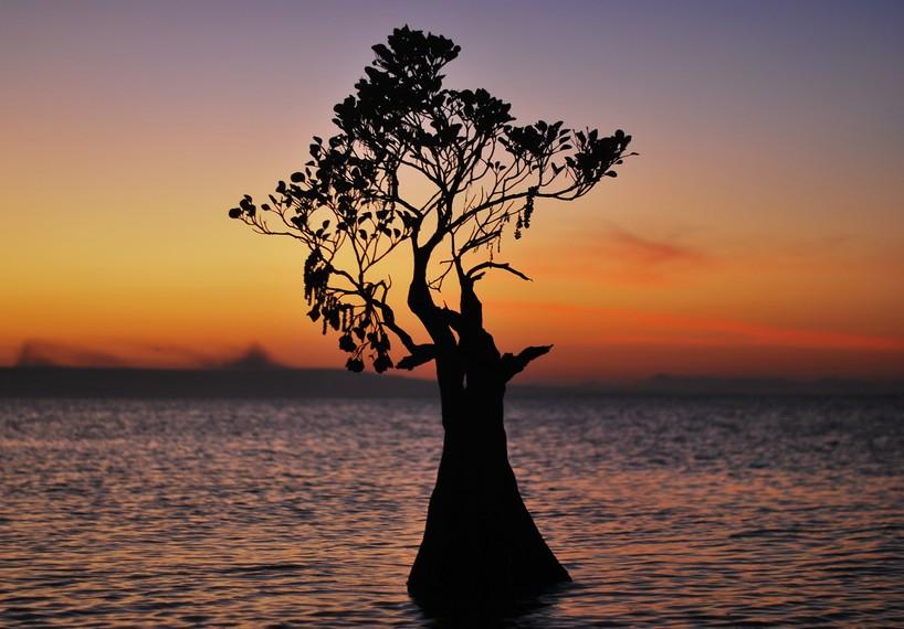 Walakiri memiliki mangrove yang unik