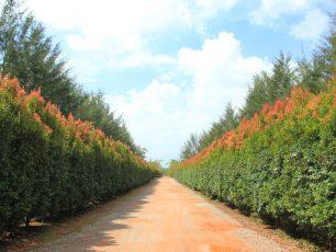 Lebih Dekat dengan Peternakan, Perikanan, dan Perkebunan di Bangka Botanical Garden