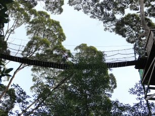 Bukit Bangkirai, Pengalaman Petualangan Alam yang Tak Terlupakan