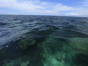 Keindahan Alam Bawah Laut Perairan Sawai