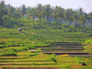 Menikmati Ragam Wisata Desa Sawarna, Sang Primadona Banten