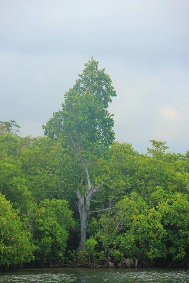 Nama Tumbak sendiri merupakan akronim dari Tumbuhan Bakau yang banyak tumbuh di sekitar desa ini