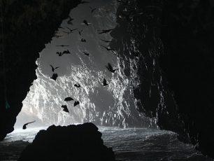 Lebih Dekat dengan Ratusan Kelelawar di Gua Kelelawar, Pulau Sangiang