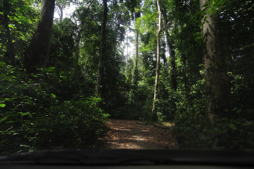 Kondisi jalan di dalam Hutan Gunung Meja yang masih asri dan sejuk