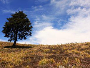 Pesona Keindahan Gunung Prau dengan Bukit Teletubbiesnya