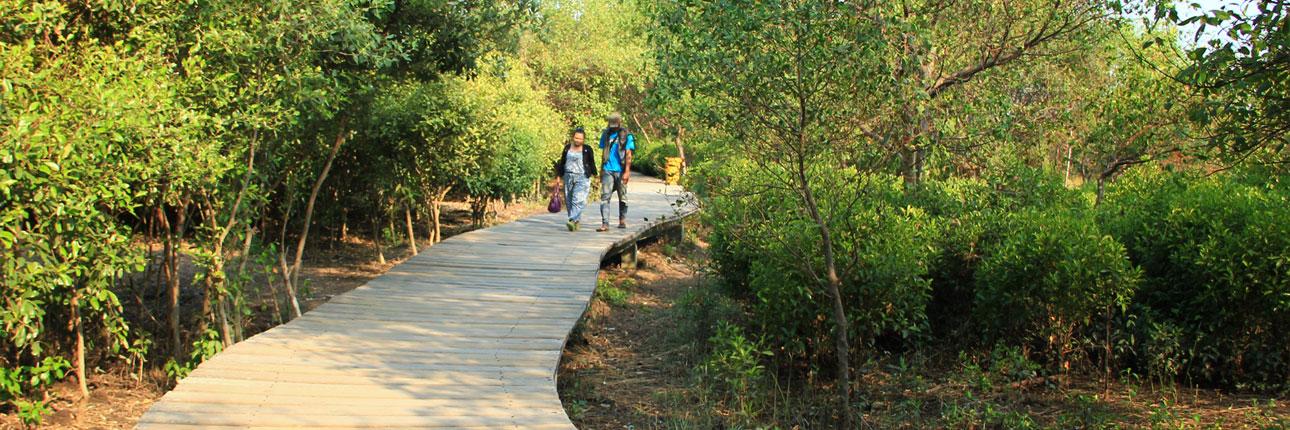 hutan-mangrove-wonorejo-1290.jpg