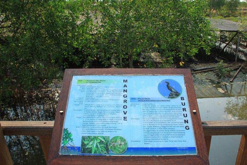 Ekowisata Mangrove Wonorejo menempati area seluas lebih dari 800 hektar dengan lokasi yang mudah diakses dari berbagai penjuru kota