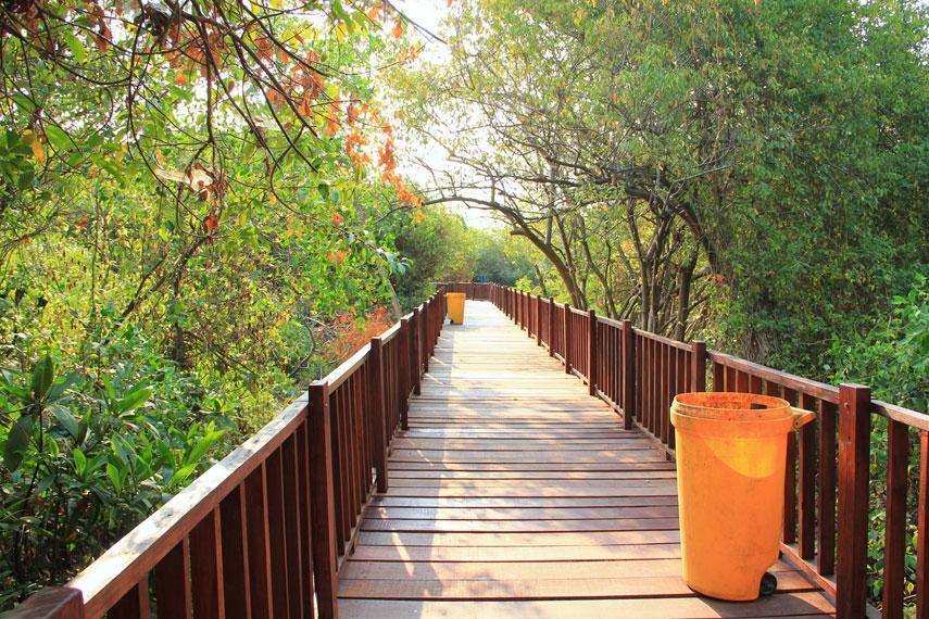Selain menggunakan perahu, hutan mangrove juga bisa dijelajahi melalui jogging track yang sudah disiapkan oleh pihak pengelola