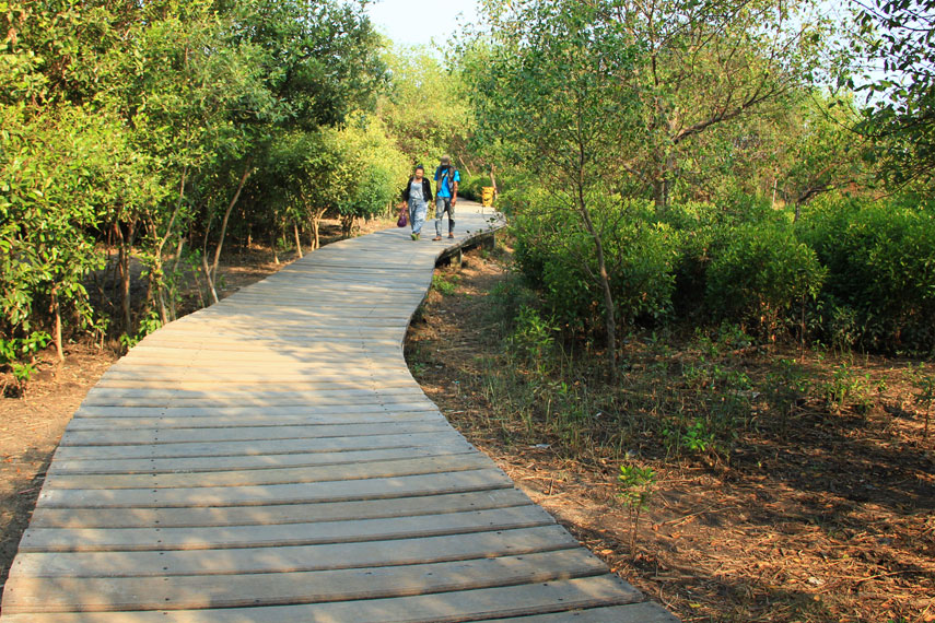 Jogging track di ekowisata ini mempunyai panjang sekitar 2 km sepanjang perjalanan, pengunjung disajikan pemandangan tanaman mangrove di sisi kiri dan kanan