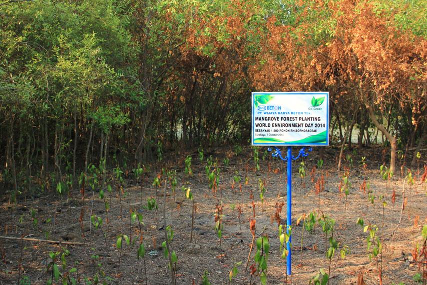 Mangrove Wonorejo bernama latin Avicennia Alba Blume, bentuknya menyerupai pohon perdu dengan susunan daun tunggal