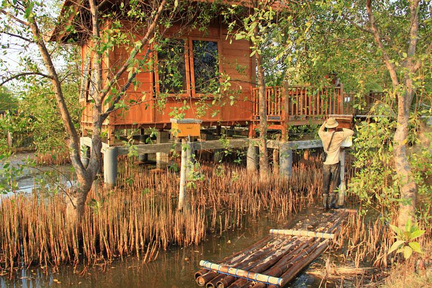 Penginapan di atas hutan mangrove yang disediakan bagi pengunjung yang ingin merasakan tinggal lebih lama di ekowisata ini