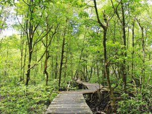 Melihat Aksi Lincah Bekantan di Hutan Wisata Mangrove Tarakan