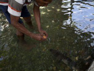 Morea, Sang Penjaga Mata Air Sungai Waiselaka