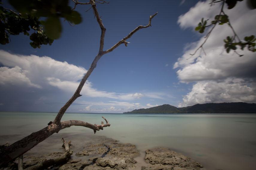 Sebuah batang pohon tumbang yang menjadi sudut menarik untuk berfoto di Pantai Sopapei