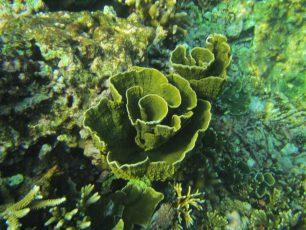 Merasakan Berenang di Permukaan Air Pulau Badul, Ujung Kulon