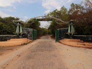 Mengamati Atraksi Si Belalai Panjang di Pusat Konservasi Gajah Way Kambas