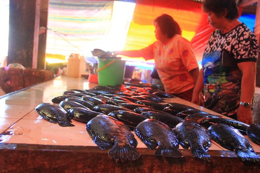 Selain daging-daging dari binatang yang tidak biasa dijual, di pasar ini juga terdapat penjual ikan sebagai alternatif pilihan