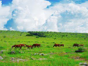 Berkejaran Dengan Kuda Sumba Di Savana Puru Kambera