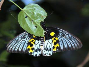 Berwisata Bersama Keluarga di Surga Kupu-kupu