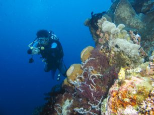 Keindahan Tersembunyi di Kedalaman Taman Laut Olele