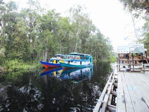 Menyapa Orangutan di Taman Nasional Tanjung Puting